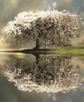 rezonanta florilor in oglindire